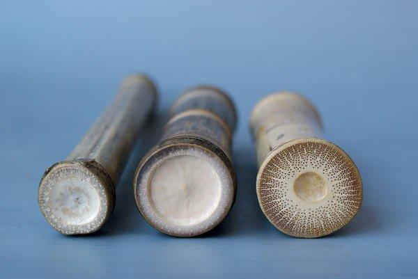 """Projektwoche """"Bambus +1"""": Auseinandersetzung mit einem besonderen ..."""