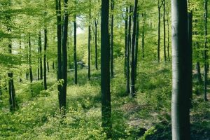 Holzindustrie_Bilanz.jpg